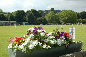 Bradfield in Bloom